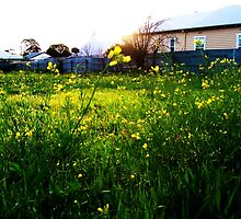 The Air is Fresh - East Geelong, Victoria, Australia by LittleSilver