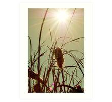 The Autumn Sun Art Print