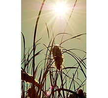 The Autumn Sun Photographic Print