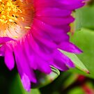 flower filled with sunshine by gary roberts
