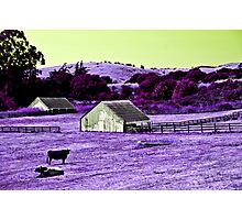 True Cows Come From Jupiter Photographic Print