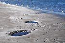 nudgee beach, queensland, australia by gary roberts
