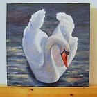 swan in kinsale, ireland by veriest