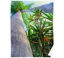 Palm Trees - HDR Poster