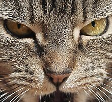 Read My Lips Said the Tabby Cat by simpsonvisuals