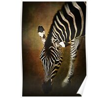 Z is for....Zebra Poster