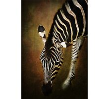 Z is for....Zebra Photographic Print
