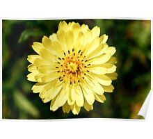 One Yellow Flower Poster