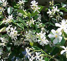 Confederate Jasmine by wayatsagi