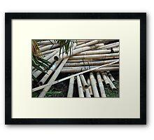 bamboo trees Framed Print