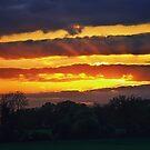 Awakening at Sunset by Vicki Field