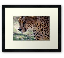 Cheetah ... Save the African Wild Cats Framed Print