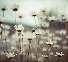 Wild Daisies by Marie Carr