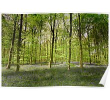 Springtime in Sherwood Forest Poster