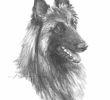 belgian shepherd drawing by Mike Theuer