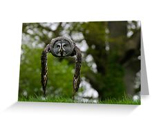 Great Grey Owl (Strix nebulosa) in flight Greeting Card