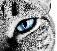 Cats Eye by tracieandrews