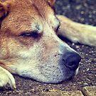 Let Sleeping Dogs Lie by Vicki Field