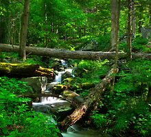 Smoky Mountains Spring by Jane Best