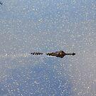 Alligator gliding through the water by katievphotos