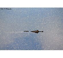 Alligator gliding through the water Photographic Print