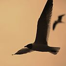 Seagulls by Amanda Huggins