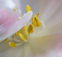 Under Cover by Lynne Morris