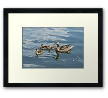Ducklings with Mother Framed Print