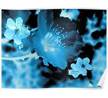 SPRING RADIOGRAPHY  Poster