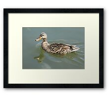 Mother Duck Framed Print