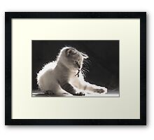 I Am One With The Leaf Framed Print