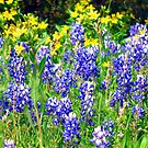 Hill Country Wildflowers by Sandra Moore