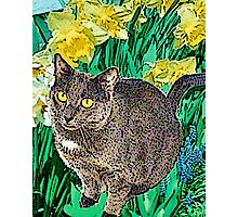Cat and Daffodils Photographic Print