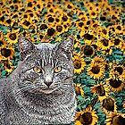 Tabby Cat and Sunflowers by Lisann