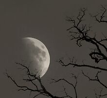 Moon by Day by Ed Luschei