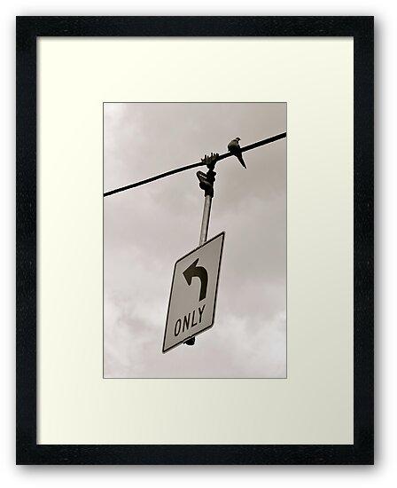 Nonconformist Bird On A Wire... by Ainsley Kellar Creations