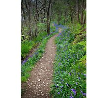 Along the Bluebell Path Photographic Print
