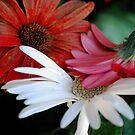 Petal Kisses by Sunshinesmile83