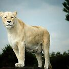 White Lion at West Midlands Safari Park by Lissywitch