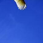 Wing Detail by Hege Nolan