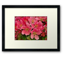 Crab Blossoms Framed Print