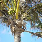 Palm Tree  by Shelagh Linton