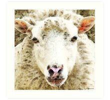 Sheep Art - White Sheep Art Print