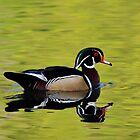 Wood Duck by Nancy Barrett