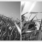 grasses by vampvamp