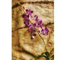 Orchid - Just Splendid Photographic Print