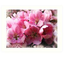 Cheery cherry blooms Art Print