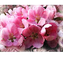 Cheery cherry blooms Photographic Print