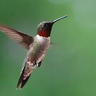 Male Ruby Throated Hummingbird in Flight - Best Viewed Large by barnsis