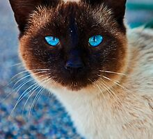 What Beautiful eyes you have! by Dave  Knowles